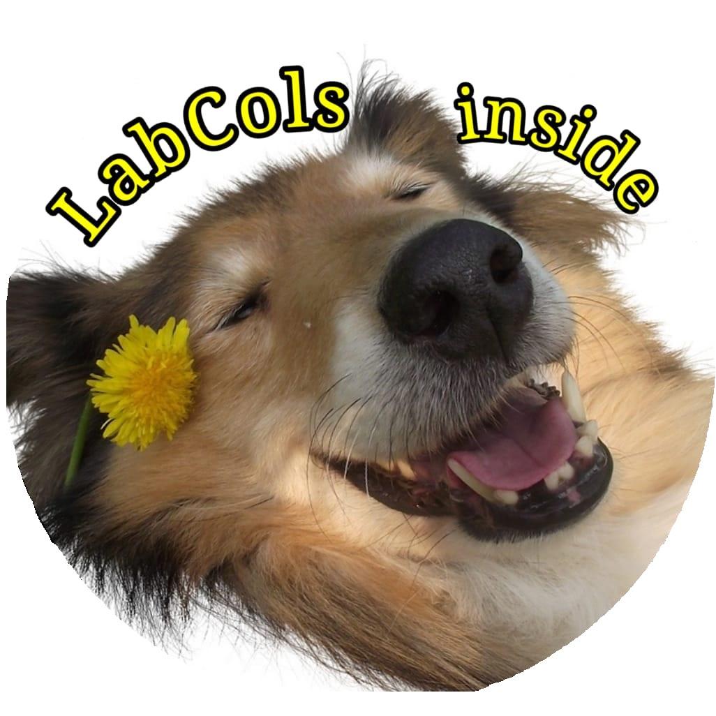 LabCols inside - Hundetraining