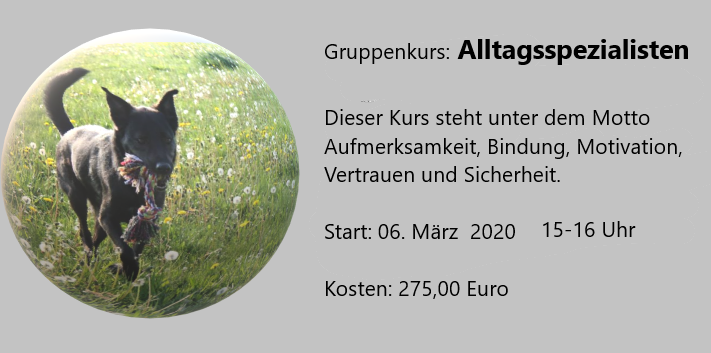 Alltagsspezialisten – Nächster Start am 06. März 2020