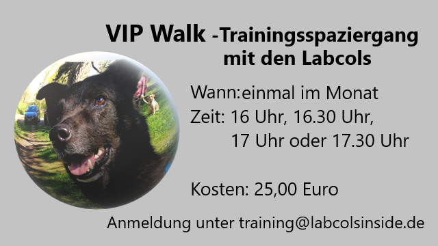 VIP Walk -Trainingsspaziergang mit den Labcols 2021